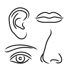 Nose ear mouth and eye vector image