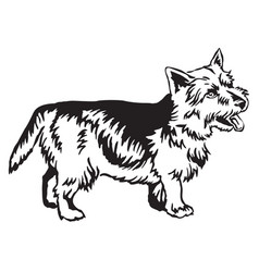 decorative standing portrait of norwich terrier vector image vector image