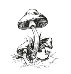 Mushrooms Amanita vector image