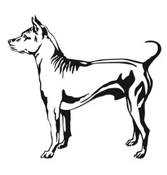 decorative standing portrait of thai ridgeback vector image vector image