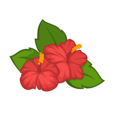 flower hibiscus rose blossom bud or bloom vector image vector image