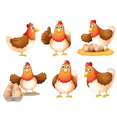 Chickens with eggs vector image