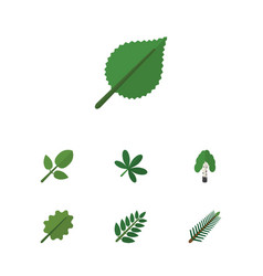 Flat icon bio set of alder linden acacia leaf vector