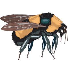 Tg00854p bee01 vector