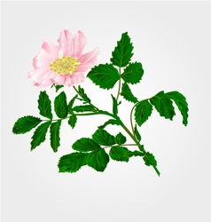 Flower eglantine twig with leaves and flower vector
