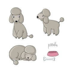 Set of cute poodle in different poses vector image vector image