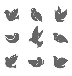 dove grey silhouette on white vector image
