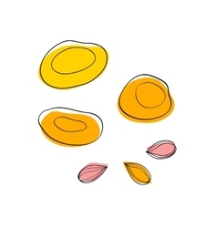 Dried apricots and apricot seeds vector