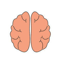 Human brain front view icon hnternal organs vector