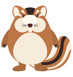 Cute chipmunk on white background vector