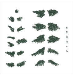 fir branches set in flat colors vector image