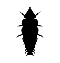 Insect in magnifier trilobite beetle duliticola vector
