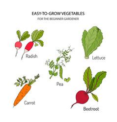 vegetables for the beginner gardener vector image vector image