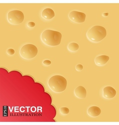 Background of cheese vector image