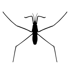 Insect in magnifierwater strider gerridae vector