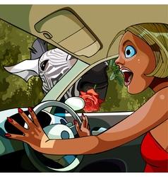 Cartoon woman driving car delights zebra vector