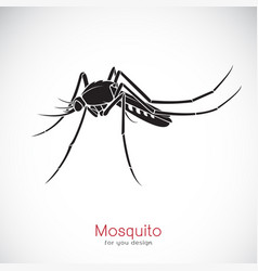 Mosquito design on white background insect vector