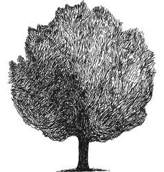 Simple sketch of a tree vector