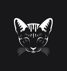 cat face on black background pet animals vector image