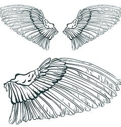 wing sketch vector image