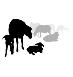 Sheep and lamb vector