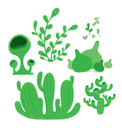 Different types of green fairy forest moss vector