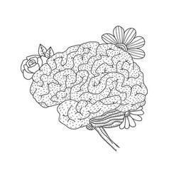 Human brain isolated on vector