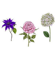 set with rose clematis and phlox flowers vector image vector image