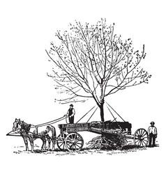 Tree relocation vintage vector