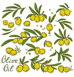 Vintage olive branches set vector