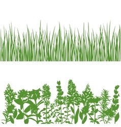 Grass and plants detailed silhouettes on white vector