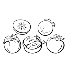Fruits persimmon black pictograms vector