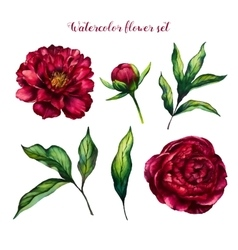 Watercolor flower set of peonies and leaves vector image vector image