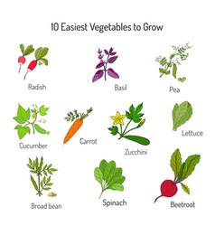 Easiest vegetables to grow vector