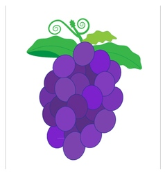 Fruit grape vector