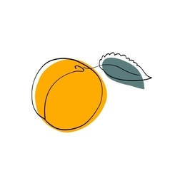 Dark yellow apricot with leaf vector
