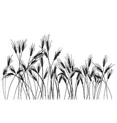 Hand drawing ears of rye vector image