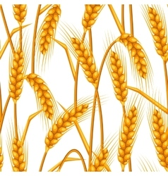 Seamless pattern with wheat agricultural image vector