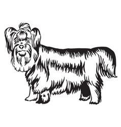 decorative standing portrait of yorkshire terrier vector image
