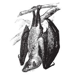 Fruit bat hanging from tree vintage vector