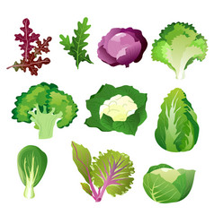 green salad leaves vegetarian healthy food vector image vector image