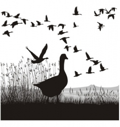 before migrating geese vector image