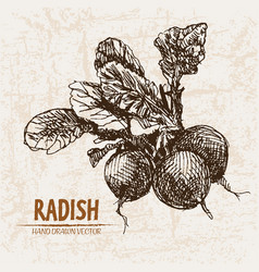 Digital detailed line art radish vegetable vector