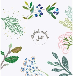 Herbal background for the organic medicine vector image vector image