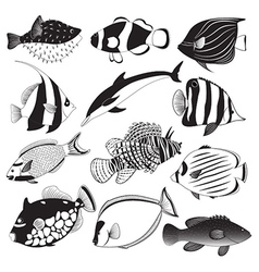 Marine fish collection vector