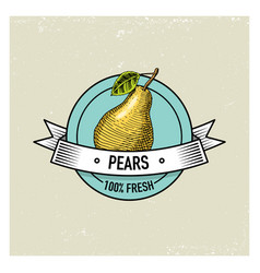 Pear vintage hand drawn fresh fruits background vector