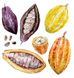 Watercolor cacao beans vector