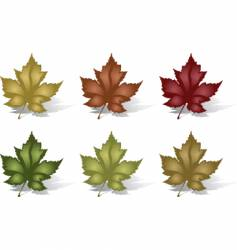 six leaves vector image vector image