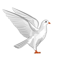 Dove white pigeon symbol peace vector image vector image