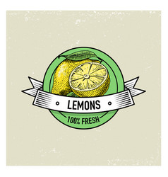 lemon vintage hand drawn fresh fruits background vector image